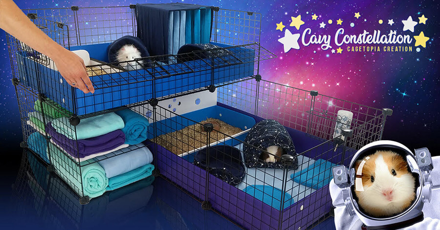 Cavy Constellation Cagetopia Creations