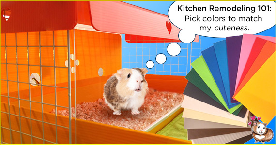 Cavy Cages Kitchens in 16 Different Colors!
