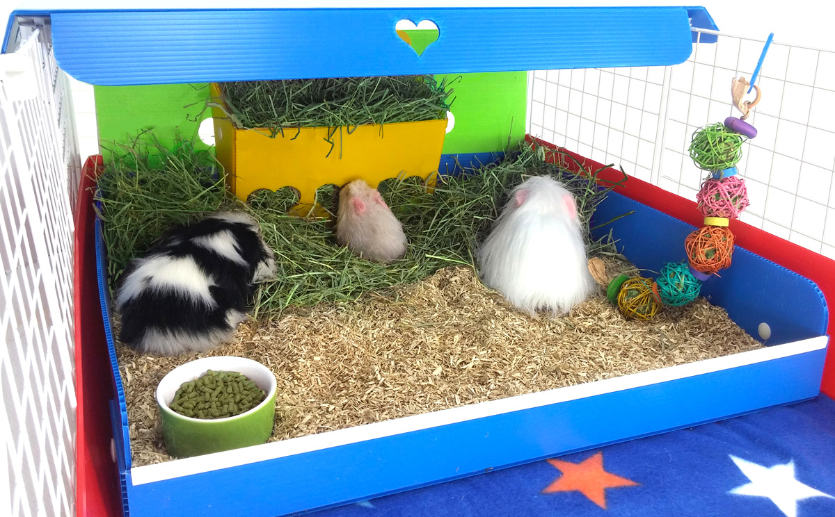 Kitchen Magic - a Cleaner Cage! & Kitchen Magic - a Cleaner Cage! - Cagetopia Blog