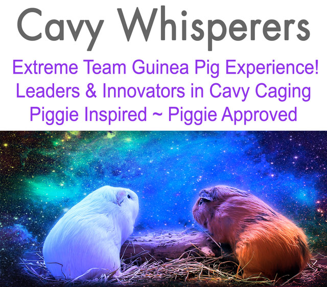 Guinea pigs looking at night sky