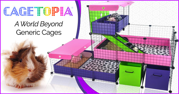 Cagetopia™ Guinea Pig Cages at Guinea Pig Cages Store