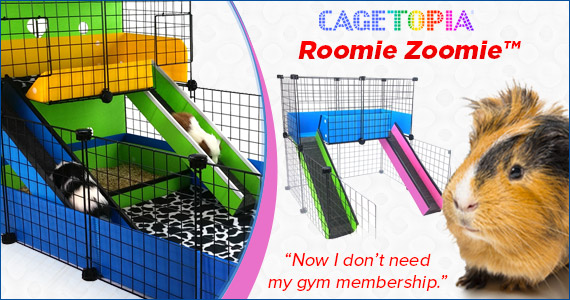 Roomie Zoomie Cages