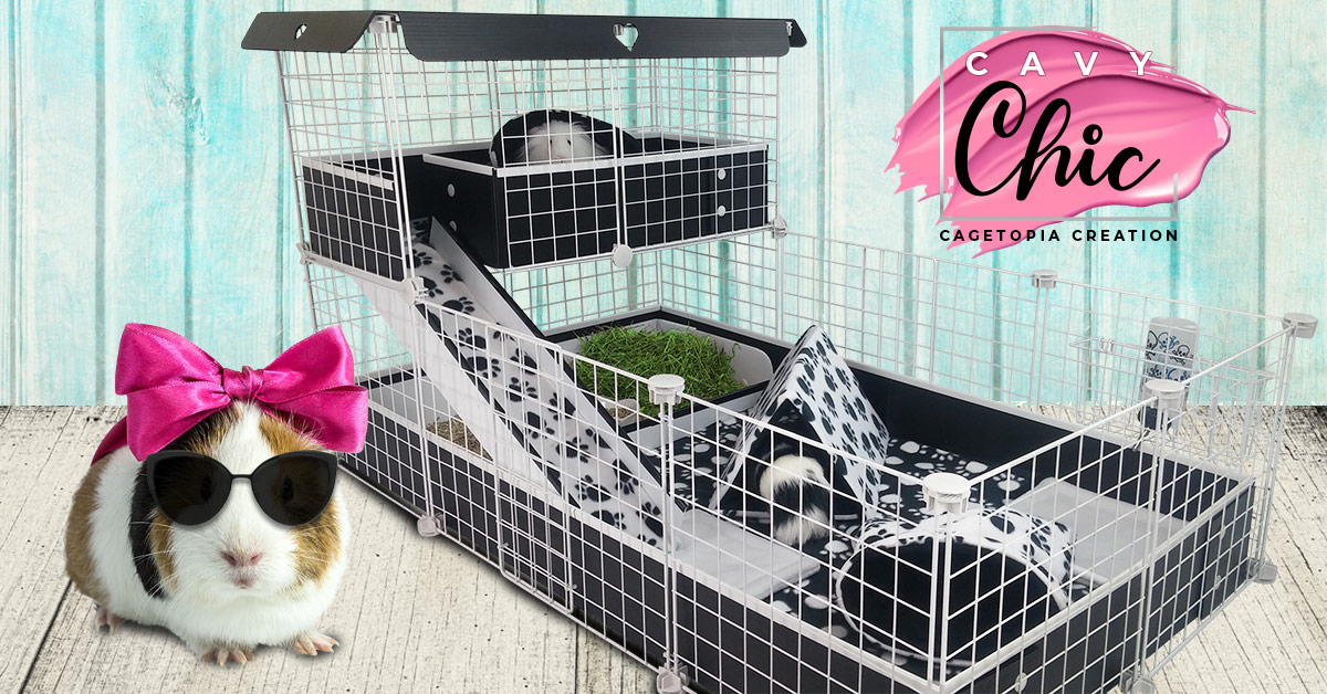 Cavy Chic Cagetopia Creation