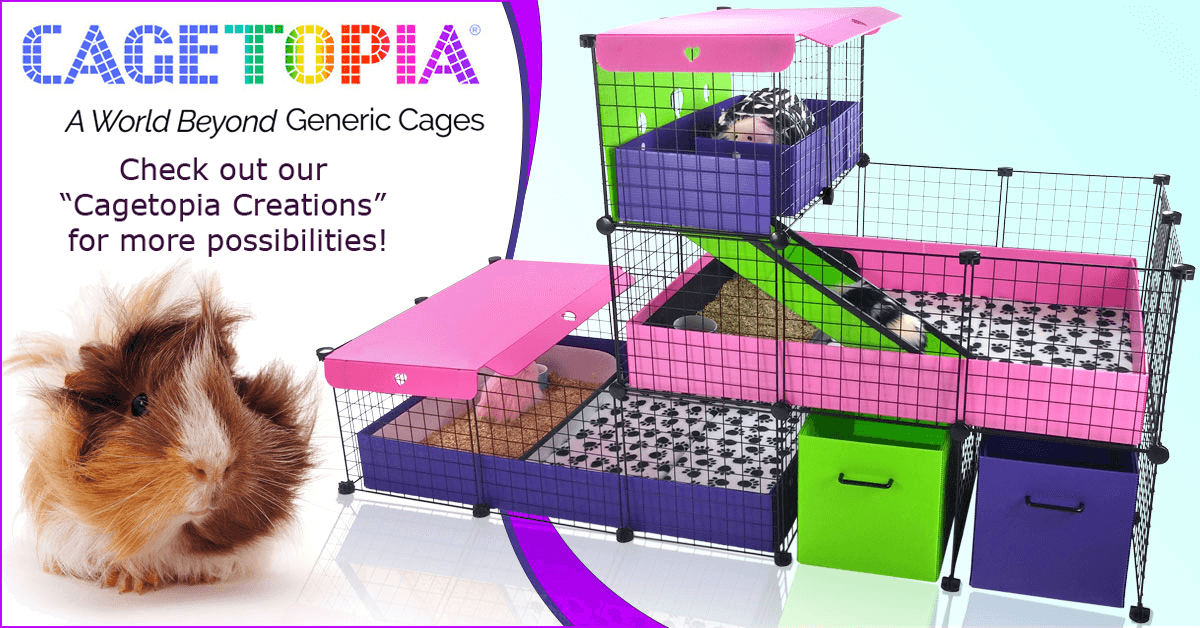 Cagetopia Cage Creations