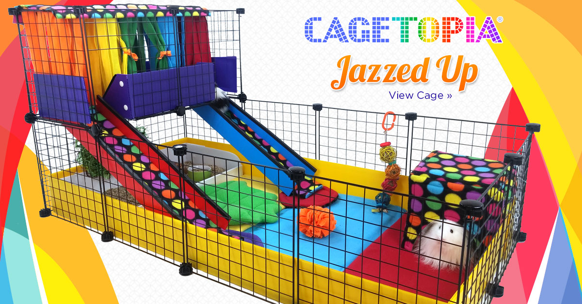 Jazzed Up Roomie Zoomie Cage Creationg