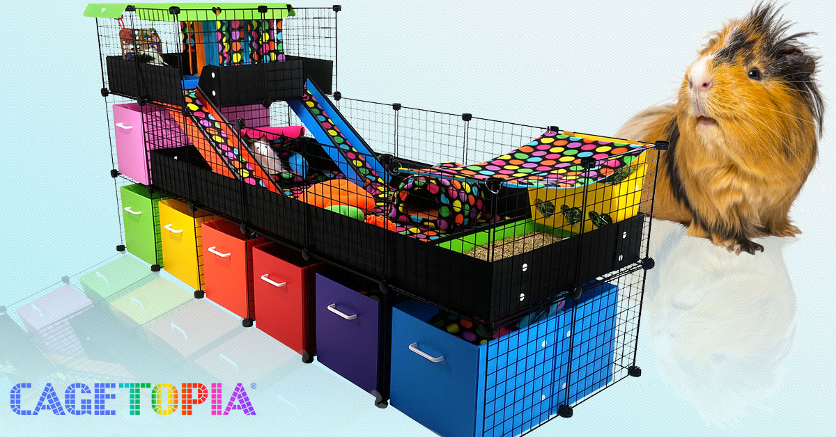 Guinea Pig Cages Store Cagetopia Cc Guinea Pig Cages