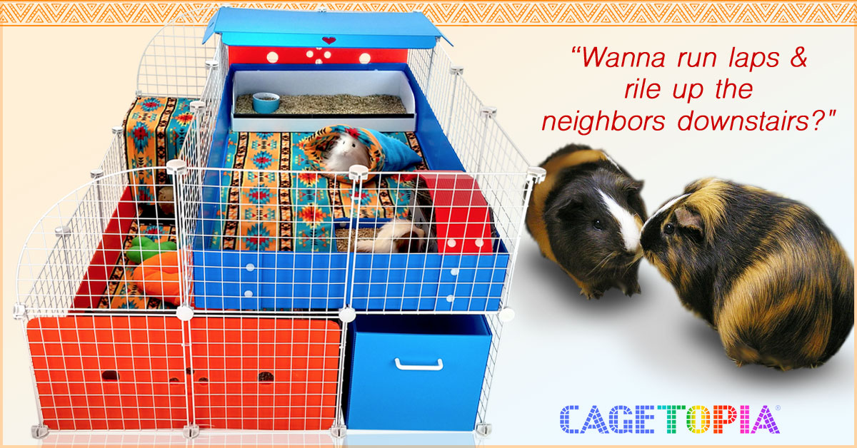 Two Story Guinea Pig Cage