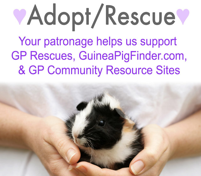 Support Guinea Pig Adoption and Rescue