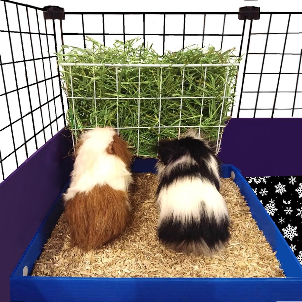 feeder product kaytee and guinea hay en shop bin left food petcostore petco pig
