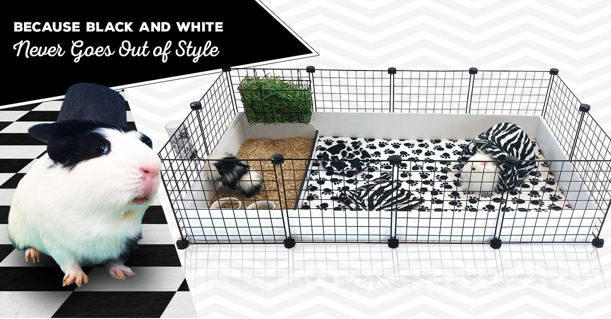 Black and White Guinea Pig Cage