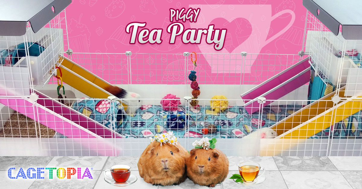 Cagetopia Tea Party Cage